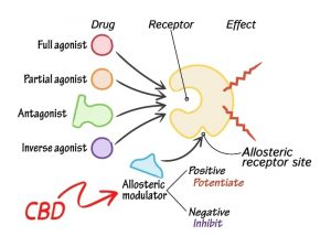 Diagram showing visual of how CBD acts as an allosteric modulator in the human body