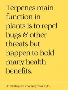 Terpenes main function in plants is to repel bugs and other threats but happen to hold many health benefits.