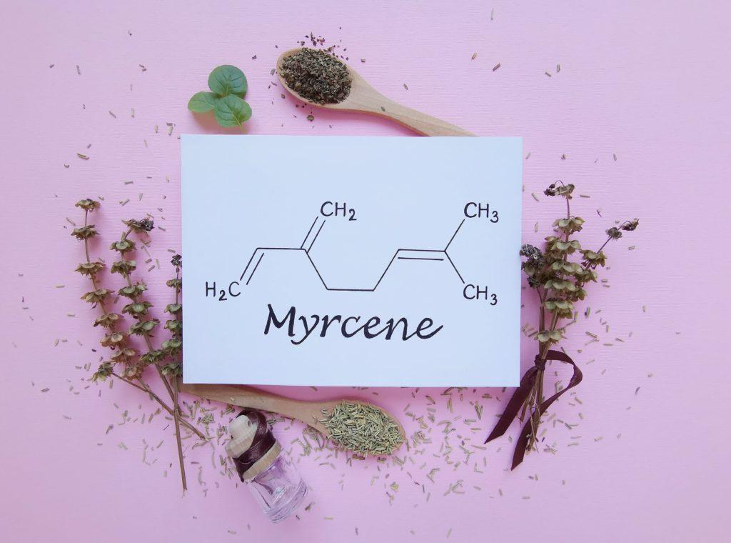 Myrcene terpene image with herbal flowers and leaves