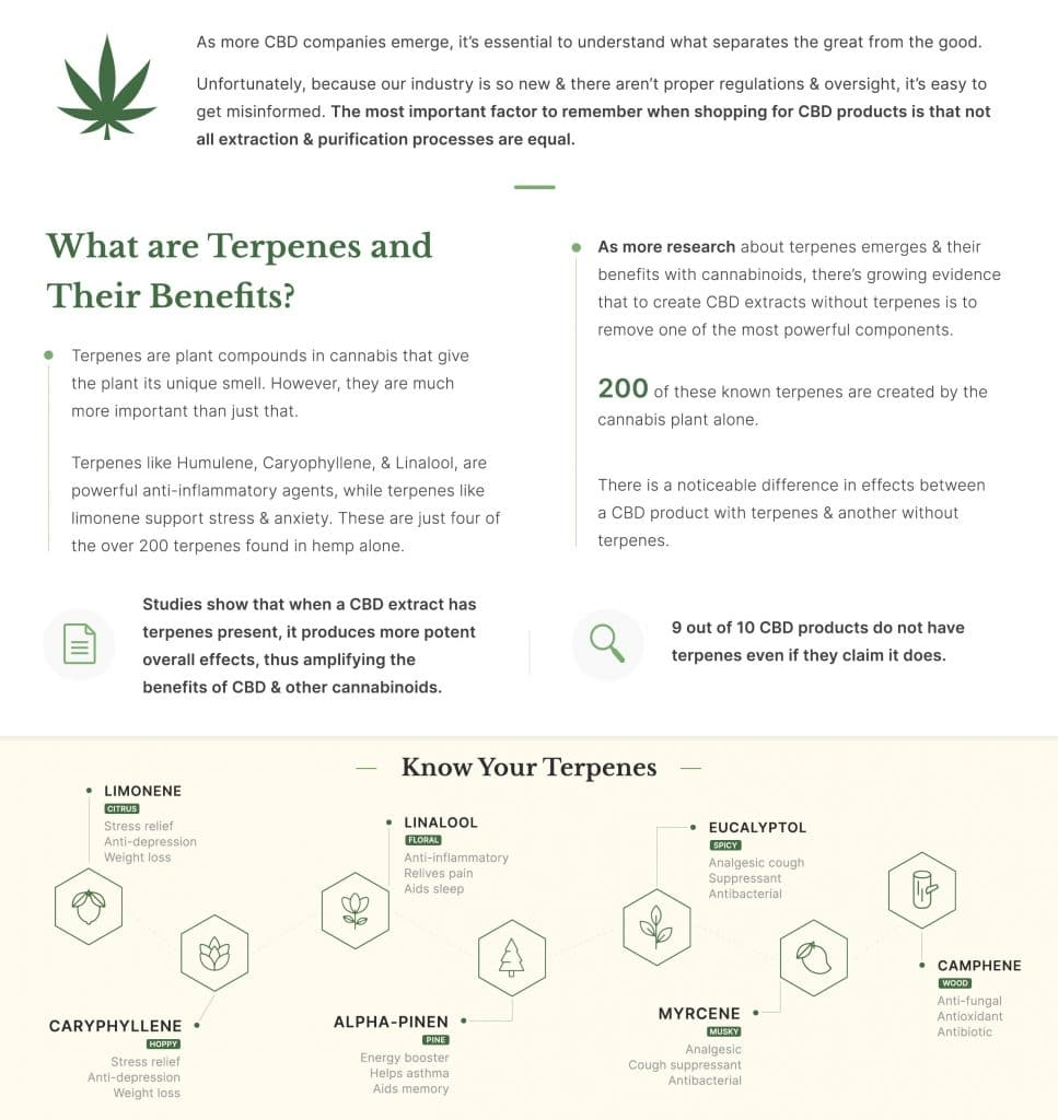 What are terpenes and their benefits infograph