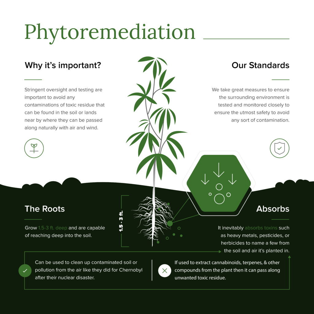Phytoremediation of Hemp Infographic explaining how hemp naturally absorbs toxins such as heavy metals, pesticides, and other toxic compounds