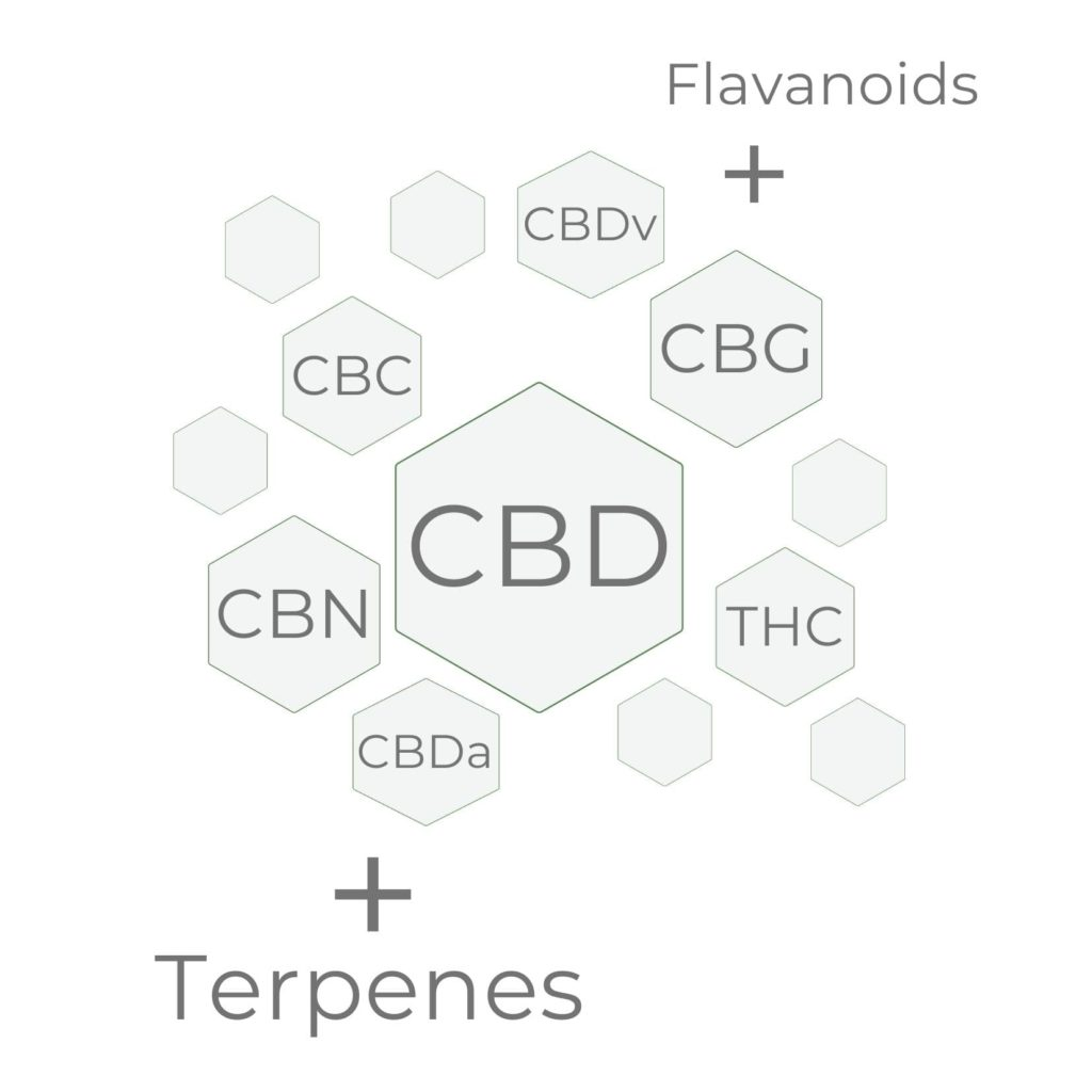 CBD Oil Entourage Effect showing CBG CBC CBN THC with terpenes synergically working together to enhance the effects