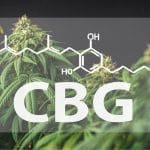 What is CBG Oil (Cannabigerol) and what does this cannabinoid do