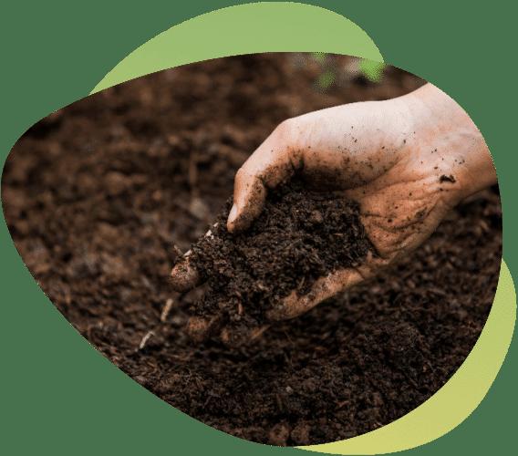 Hemp Cleans Soil & Air, but Beware…