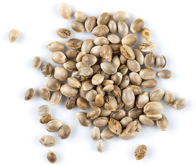 Not Just Any Seeds